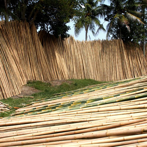Bambuszentrum Pfalz - Bambusrohre